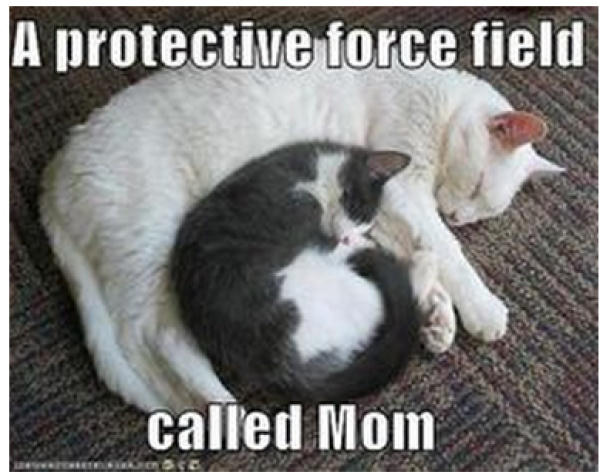 Funny Meme For Mothers Day : Your mom would approve of these funny mother s day memes